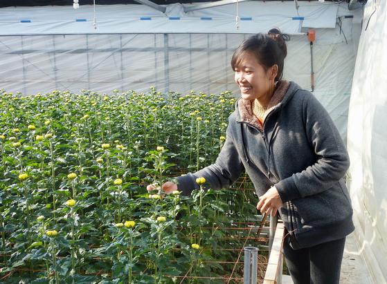 저출산 고령화로 만성적인 일손 부족에 시달리는 일본 정부가 외국인 노동자에 노동시장을 대폭 개방하고 있다. 사진은 아이치(愛知)현의 원예 농가에서 기능실습생으로 일하는 베트남 노동자의 모습.[교도=연합뉴스]