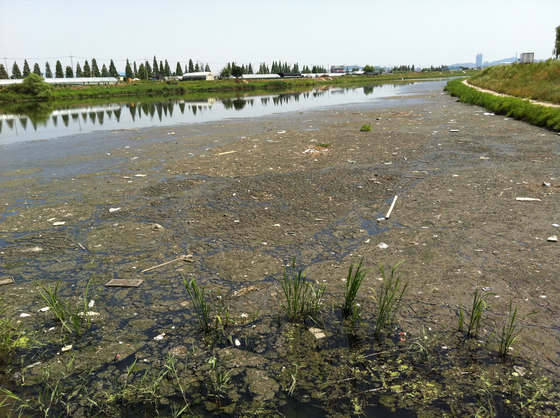 2011년 여름 굴포천이 온갖 쓰레기와 오물로 뒤덮여 있다. [사진 인천환경운동연합]