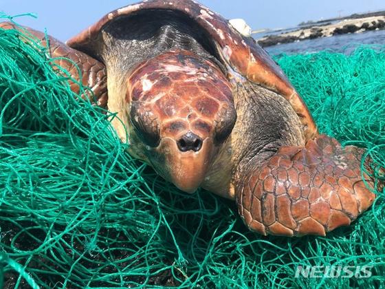 """폐그물 걸린 국제보호종 '붉은바다거북'…""""치료 끝나면 방류"""""""