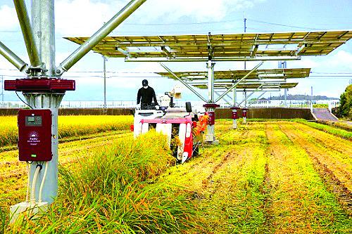 영농 태양광을 활용하면 벼를 키우며 태양광 발전을 할 수 있다. 수확량이 일반 논의 80%에 달한다. 그러나 전기를 팔 수 있는 선로가 마련돼야 확대될 수 있다. [중앙포토]