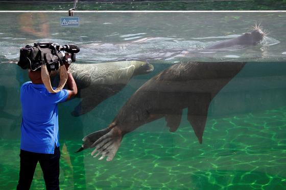 프랑스 파리 인근의 뱅센숲 동물원에서 26일 바다사자들이 수영을 하고 있다.[로이터=연합뉴스]