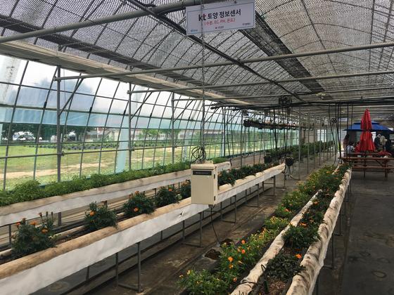 이곳은 기후·토양의 상태에 따라 농장의 환경을 자동으로 조정하는 '스마트팜'이다. 덕분에 농사 경험이 없고 숙련되지 않은 장애인 농부들도 쉽게 적응 할 수 있다. 고석현 기자