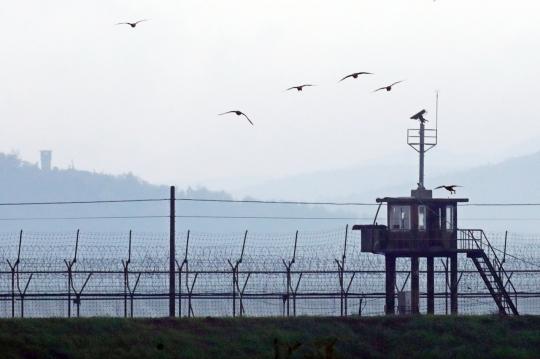 기사 내용과 무관한 자료 사진. 북한 접경지역에 새떼가 날고 있다. [연합뉴스]