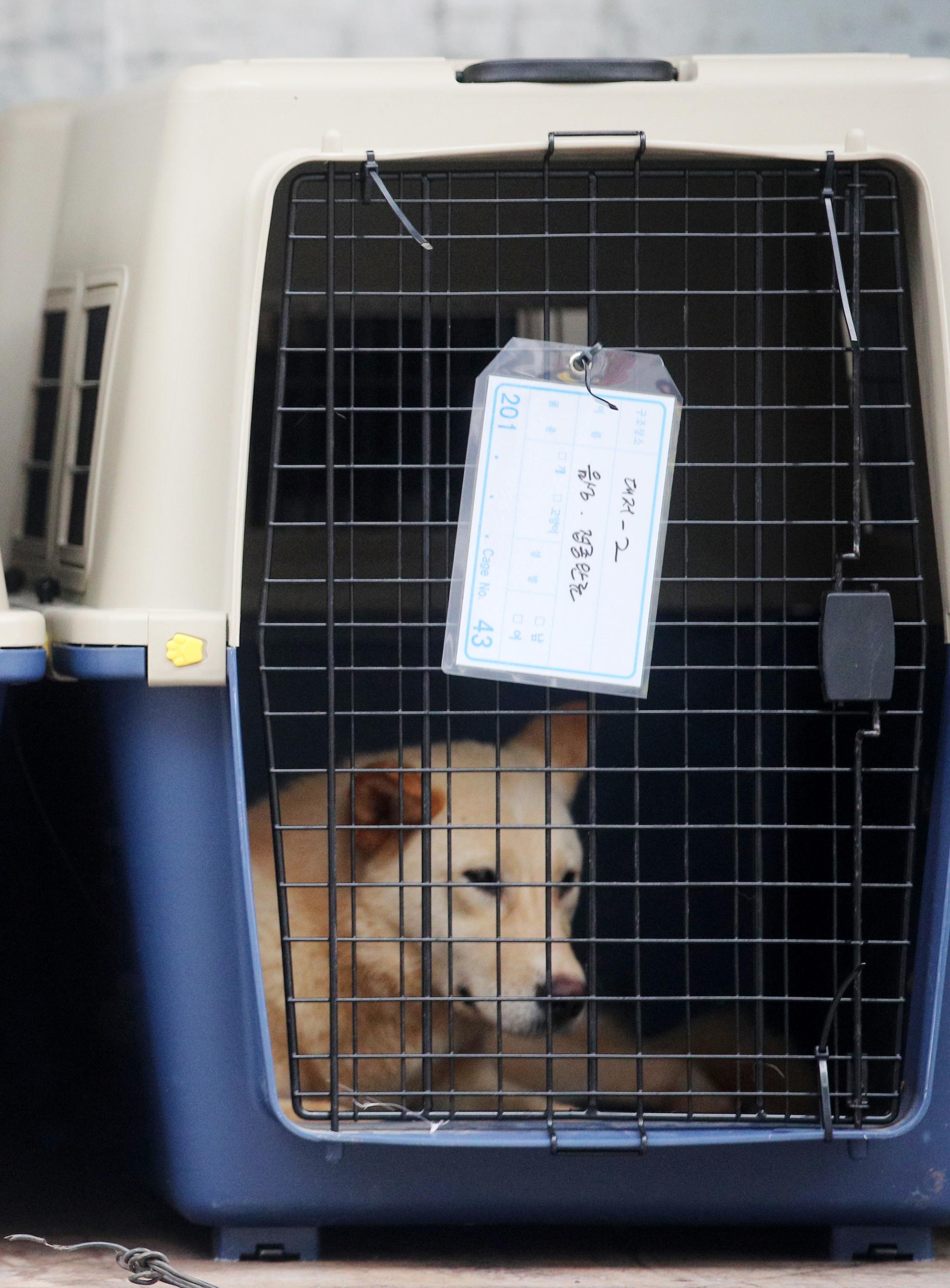 1일 오후 부산 북구 구포시장 내 가축시장(개시장)에서 동물보호단체들에게 구조된 반려동물.[연합뉴스]
