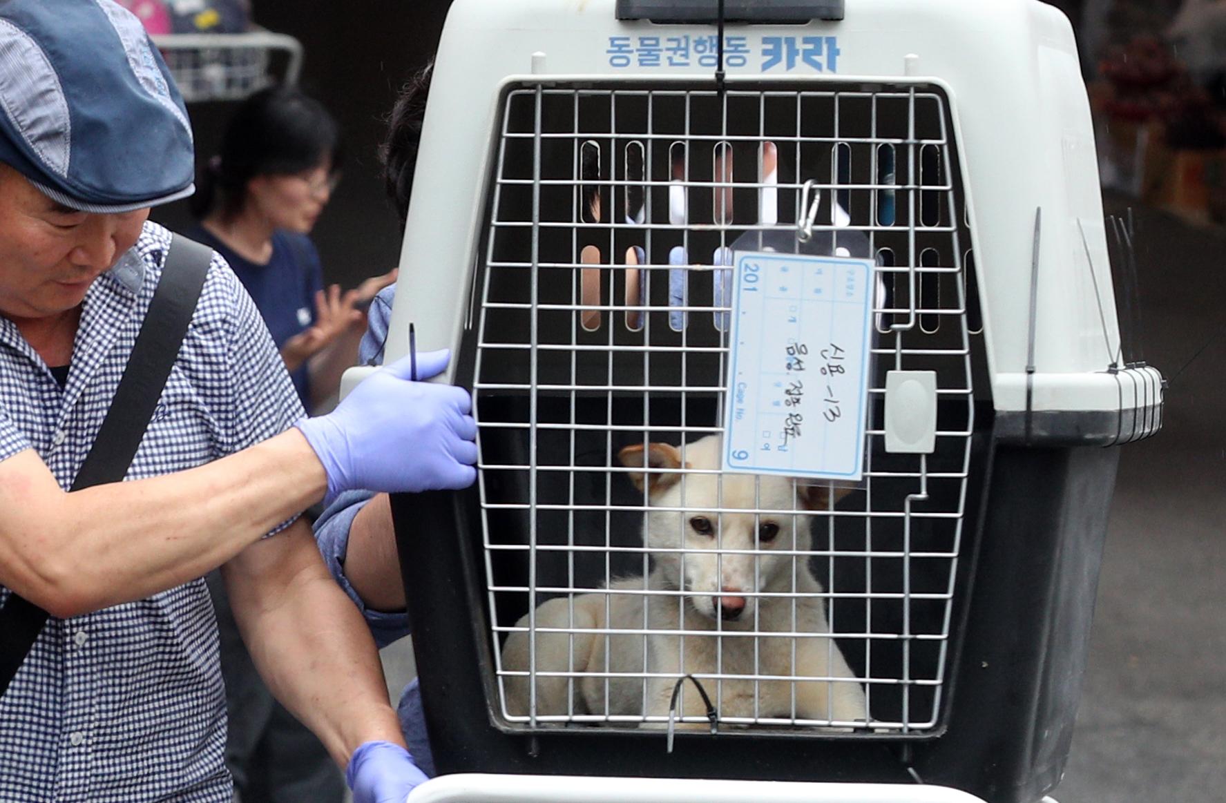 1일 오후 부산 북구 구포시장 내 가축시장(개시장)에서 동물보호단체들이 개들을 구조하고 있다. 어디로 가는지를 아직 실감못한 반려동물의 눈빛엔 두려움이 가득하다. [연합뉴스]