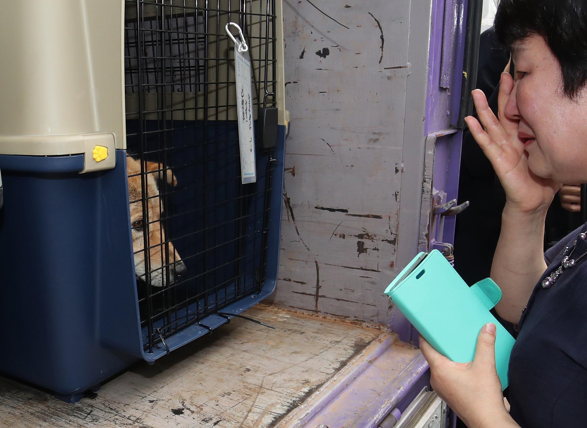 1일 오후 부산 북구 구포시장 내 가축시장에서 동물보호단체들이 구조한 개들을 보며 한 시민이 눈물을 흘리고 있다. [뉴스1]