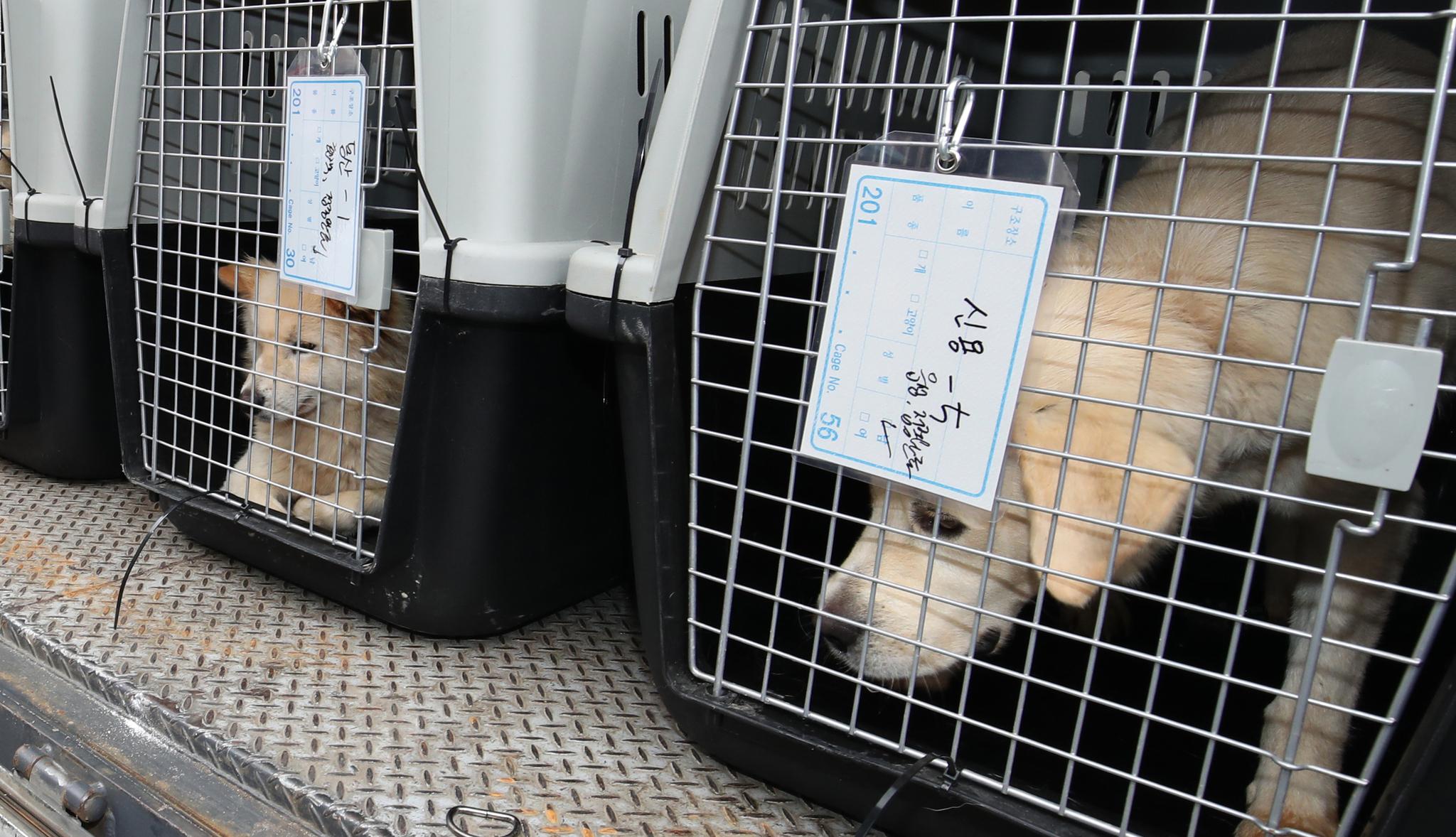 1일 오후 부산 북구 구포시장 내 가축시장에서 동물보호단체들에 의해 구조된 반려동물들.[뉴스1]