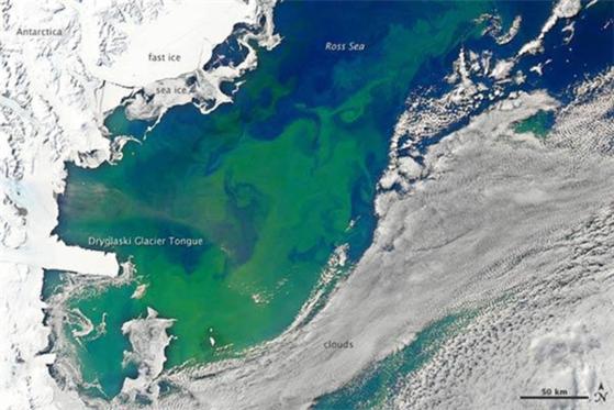 . 남극 봄철 로스해에서 나타나는 미세조류 (녹색 영역) 번성 모습. [사진 NASA]