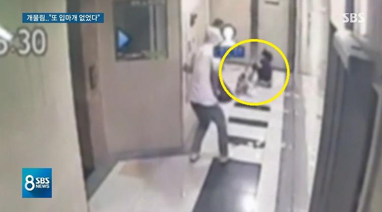 35개월 여자아이가 12kg짜리 폭스테리어에 물려 끌려가는 모습. [사진 SBS]