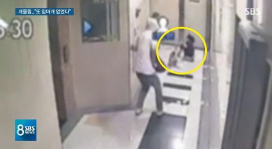 35개월 여자아이가 12kg짜리 폭스테리어에 물려 끌려가는 모습 [사진 SBS]