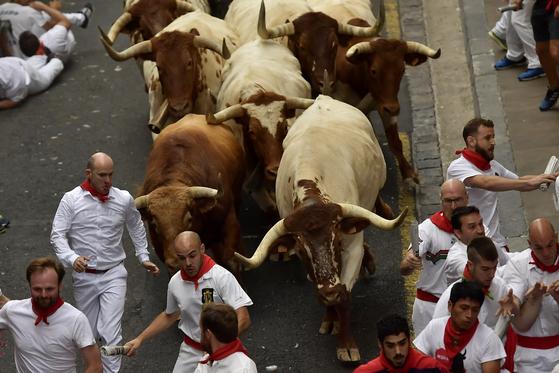 스페인 팜플로나에서 개막한 산페르민 축제 참가자들이 7일(현지시간) 황소와 함께 좁은 골목길을 달리고 있다. [AP=연합뉴스]