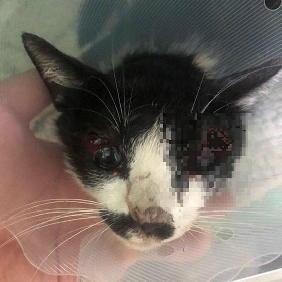 아산의 한 고교에서 폭행당한 길고양이 모습. 눈에서 피도 흘리고 있다. [연합뉴스]