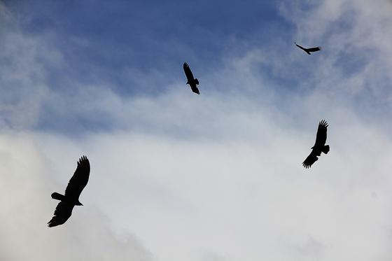 마요르카는 쇼팽과 상드에게 너무 가혹한 곳이었다. 날씨가 매서워 머무르기도 너무 추웠고, 파도가 높아 배를 타고 떠나지도 못했다. 쇼팽도 죽음의 문턱 앞을 오갔다. 수도원의 하늘 위에는 독수리가 날아다니며 을씨년스러움을 더했다. [사진 pixabay]