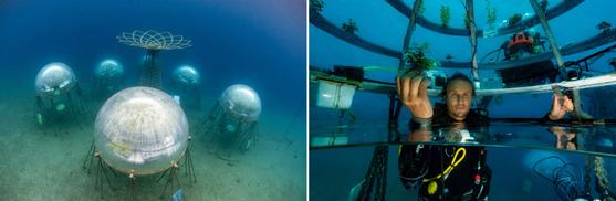 이탈리아에 있는 '네모의 정원'. 해저에 만든 투명돔에서 작물을 재배하고 있다.[사진 오션리프그룹]