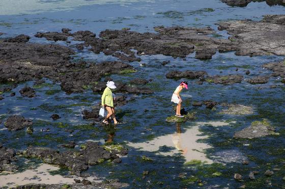 물 빠진 금능리 앞바다는 아이들 놀이터가 된다. 손민호 기자