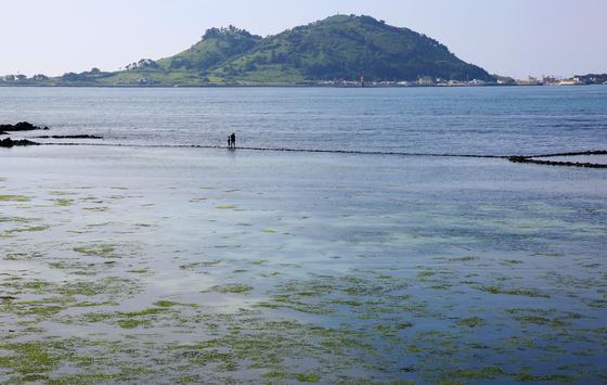 막 물이 들어오는 시각 금능리 바다. 바다를 가로지르는 검은 선이 원담이다. 손민호 기자