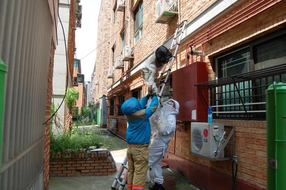경기도소방재난본부 대원들이 주택가에 출동해 벌집을 제거하고 있다. [사진 경기도]