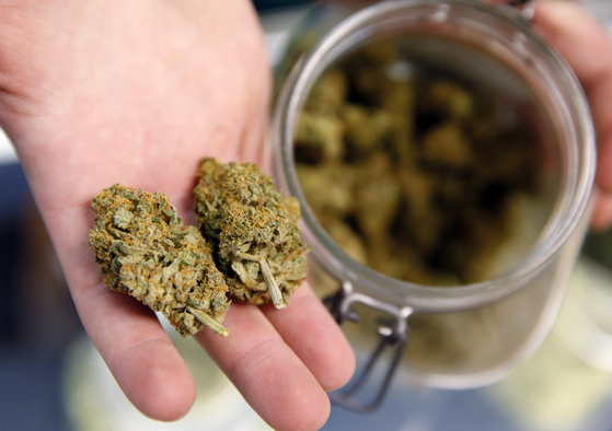 덴버 북부의 한 디스펜서리에서 판매하고 있는 말린 마리화나 가지. [AP=연합뉴스]