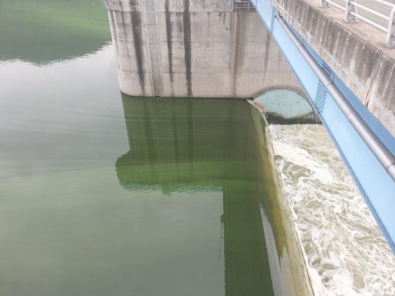 지난 15일 낙동강 창녕함안보 일대에 발생한 녹조. [사진 낙동강유역환경청]