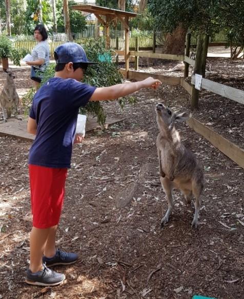 호주에서는 캥거루에게 직접 먹이를 주고 만져볼 수 있다. 야외에서 캠핑하다 보면 깡충깡충 뛰어다니는 캥거루 무리를 흔히 볼 수 있다. [사진 전지영]