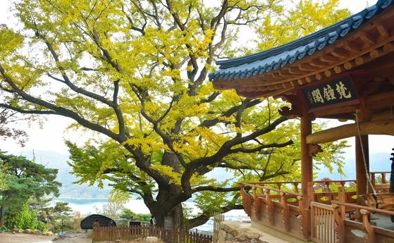 남양주 수종사 은행나무. [사진 경기도]