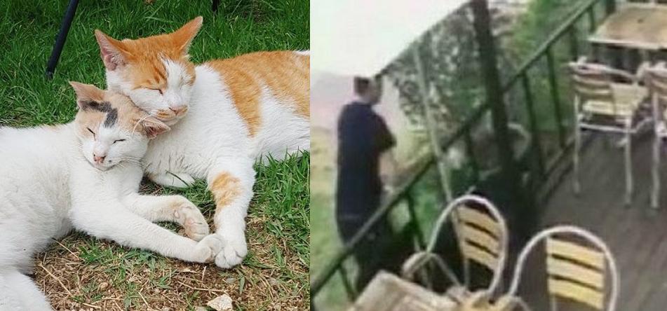 지난 13일 잔혹하게 살해된 고양이 '자두'(왼쪽)의 생전 모습, 경의선 숲길 고양이 사건으로 체포된 30대 남성. [사진 인스타그램·SNS]