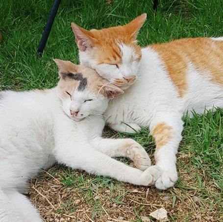 지난 13일 잔혹하게 살해된 고양이 자두의 생전 모습. 그는 3가지 색깔의 털이 섞여 '삼색 고양이'로 불렸다. [사진 인스타그램 캡처]