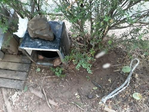 지난 24일 서울 양천구 목동의 한 아파트 단지에서 발견된 고양이 사체. [사진 동물자유연대]