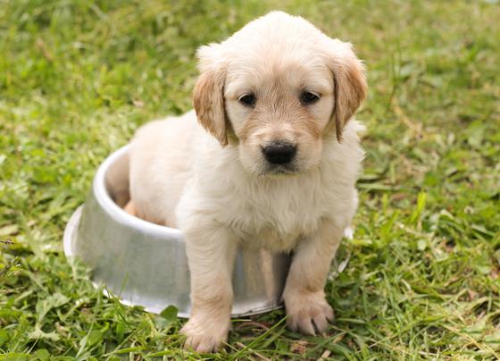 국내 반려동물 수는 700만 마리로 추산된다.