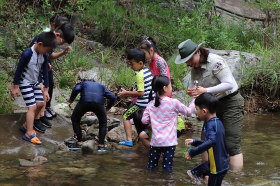 여름방학을 맞아 소백산국립공원 남천 계곡에서 진행되는 생태체험 프로그램 모습. [사진 환경부]