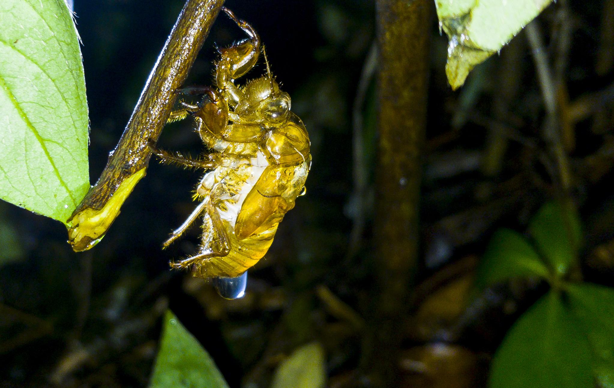 비에 적은 애벌레 껍질