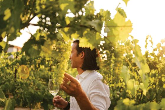 나이아가라 온 더 레이크에는 캐나다를 대표하는 '이니스킬린 와이너리'가 있다. 수준급 아이스와인을 맛보고 와인 생산 공정도 볼 수 있다. [사진 캐나다관광청]