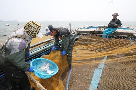 어민들이 새우잡이에 나선 모습. [중앙포토]