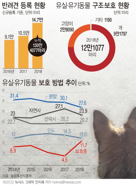 지난해 신규 등록된 반려견은 14만 6617마리로 전년대비 39.8% 증가했다. 농식품부가 올해 7,8월을 동물등록 자진신고기간으로 정함에 따라 7월 한달간 12만6000여마리의 반려견이 동물등록을 마쳤다. [뉴시스]