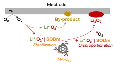 리튬공기전지 시스템에서 예상되는 SODm(MA-C60)의 불균등화 반응 메커니즘 SODm(MA-C60)이와 활성산소(O2-)와 결합하여 활성산소를 안정화 시키고(stabilization), 용액내에서 불균등화반응(Disproportionation)을 유도하여 리튬과산화물 (Li₂O₂)과 산소(O2)를 생성한다. [그림 UNIST]