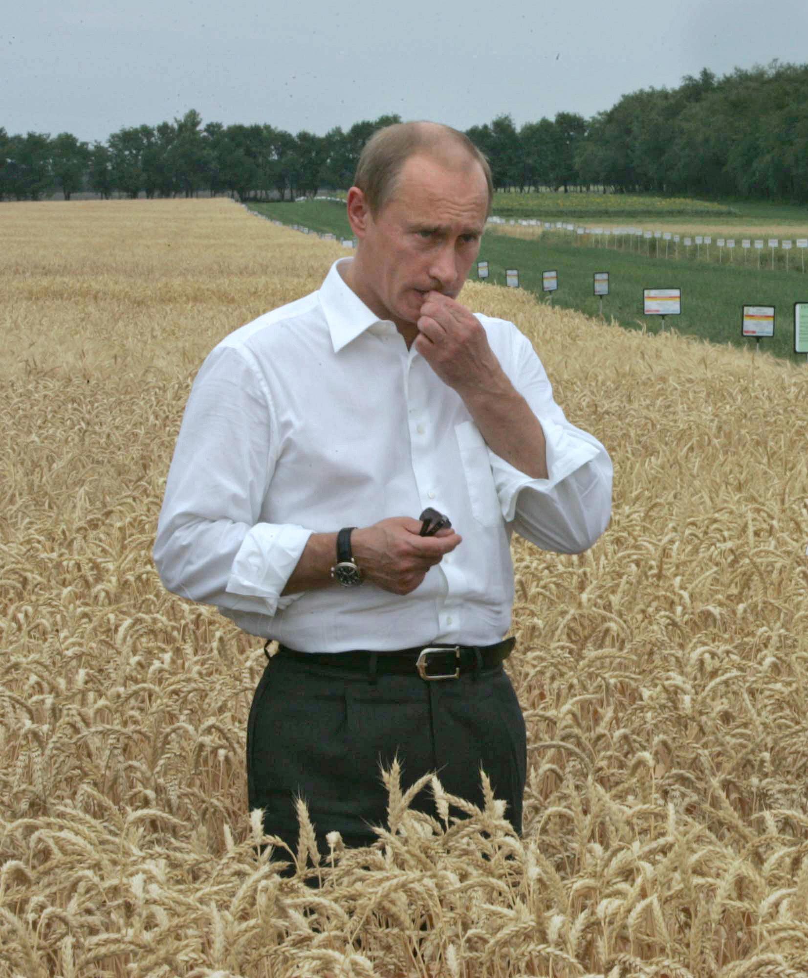 2007년 6월 30일, 농업박람회에 참가한 푸틴이 밀밭에 들어갔다. [AFP=연합뉴스]