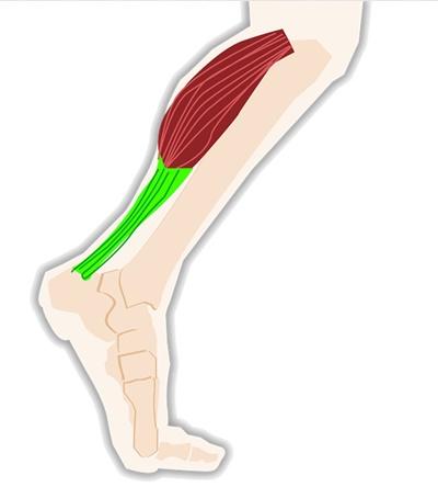 사람이 움직이는데 필요한 근육과 관절은 어느 하나 빼놓을 수 없지만, 그중 중요하게 관리해야 하는 부위 중 하나는 종아리 근육이다. [사진 pixabay]