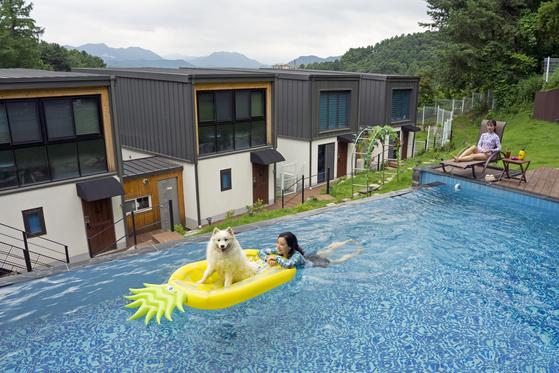 '펫팸족'을 위한 애견 펜션이 늘고 있다. 한적하고 독립된 공간에서 반려견과 맘 놓고 뛰놀 수 있어 인기가 높다. 경기도 가평의 펜션 '개가사는그집'에서는 반려견과 야외 수영을 즐길 수 있다.