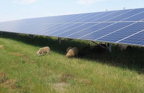 독일 작센안할트주에 한화큐셀이 설치한 태양광 발전소. 독일은 2050년까지 온실가스 배출량을 1990년 대비 최대 95%를 감축한다는 목표를 세웠다. [사진=한화그룹]
