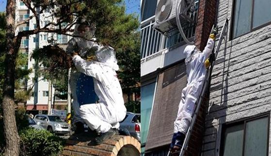 벌집제거 신고를 받고 출동한 119대원들이 소나무, 주택 외벽에 붙어 있는 벌집을 제거하고 있다. 지난해는 벌쏘임으로 10명이 숨지기도 했다. [사진 소방청]