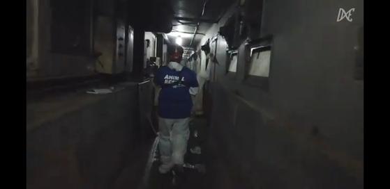 지난달 28일 동물권 행동 단체 '디엑스이 서울(DxE Seoul)은 경기도에 위치한 한 종돈장에서 새끼 돼지들을 데려왔다고 밝혔다. ['Direct Action Everywhere-Seoul' 페이스북 페이지 캡처]