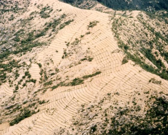 1960년대 경북 금릉 지역(현 김천시)에서 나무를 심기 위해 사방공사를 한 모습. [중앙포토]