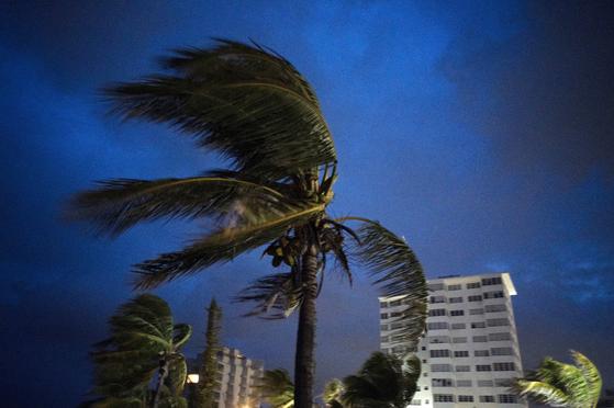 1일 5급 초강력 허리케인 도리안이 강타한 바하마령 그랜드바하마섬 프리포트의 나무가 시속 300km에 달하는 강풍으로 인해 휘어져있다. [AP=연합뉴스]
