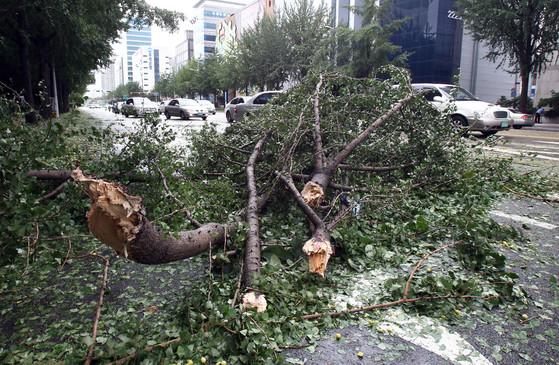 2010년 9월 2일 태풍 '곤파스'가 지나간 서울 잠실에서 가로수가 쓰러져 차들이 우회하고 있다. [중앙포토]