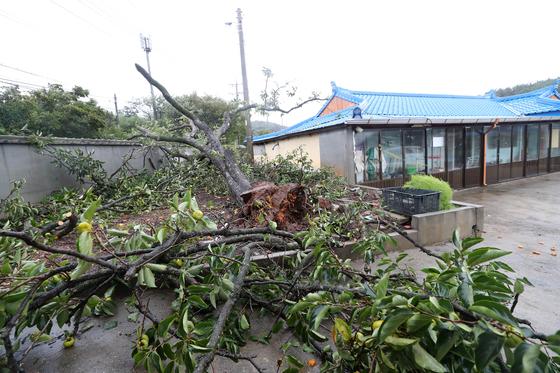 태풍 '링링'이 북상하는 7일 오후 충남 태안군 안면읍 창기리 한 주택 울타리 안에 나무가 쓰러져 있다. [연합뉴스]