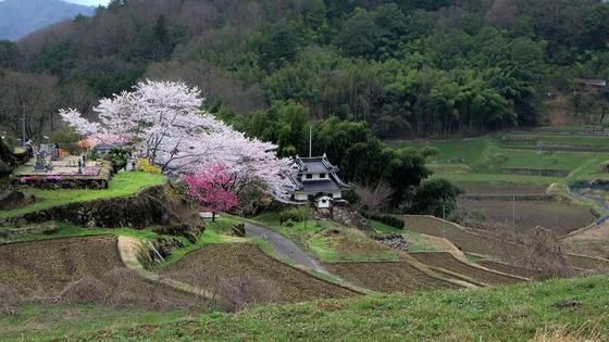 아무도 살지 않는 '빈집'의 증가가 일본의 새로운 사회문제로 떠오르고 있다. [사진 pxhere]