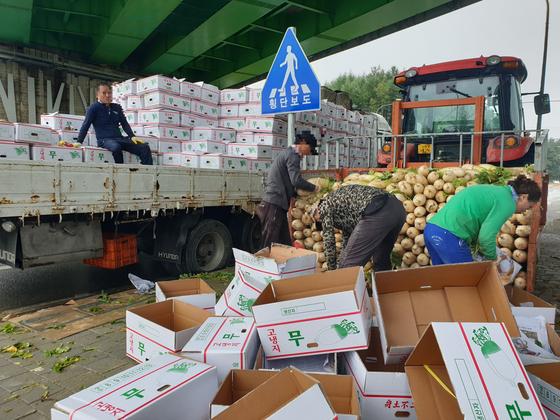 지난 4일 강원도 평창군 대관령면 한 다리 밑에서 농민들이 수확한 고랭지 무를 박스에 담고 있다. 이들은 박스가 비에 젖지 않도록 2㎞가량 떨어진 밭의 무를 트랙터로 옮겨왔다. 박진호 기자