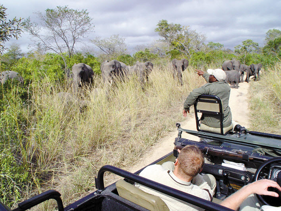 하나투어 제우스월드가 인기가 높아지는 맞춤 여행을 추천했다. 사진은 남아공 크루거 사파리 모습. [사진 하나투어]