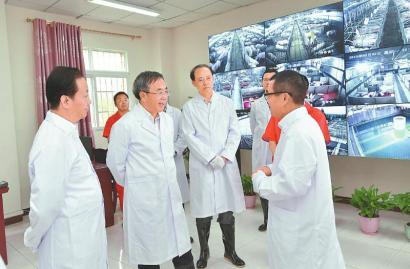 2일 후춘화 부총리(왼쪽 두번째)가 쓰촨성의 한 씨돼지 양육장을 시찰하고 있다. [사진=사천일보 캡처]