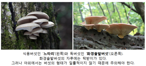 식용버섯과 독버섯 비교. [사진 국립수목원]